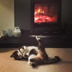 Lily has got that Friday feeling #cutecat #catsofinstagram #stovax