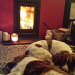 """Dogs love the warmth"""