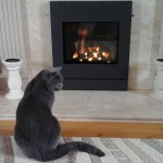 """""""The cat likes it!"""""""