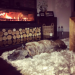 Someone's happy the Burner is on 💗Milly #logburner #stovax #staffy