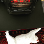 Warming my tummy! #whitecat #whitecats #whitecatlove #rescuecat #rescuecats #rescuecatsrock #stovax #woodburner #colchestercatrescue