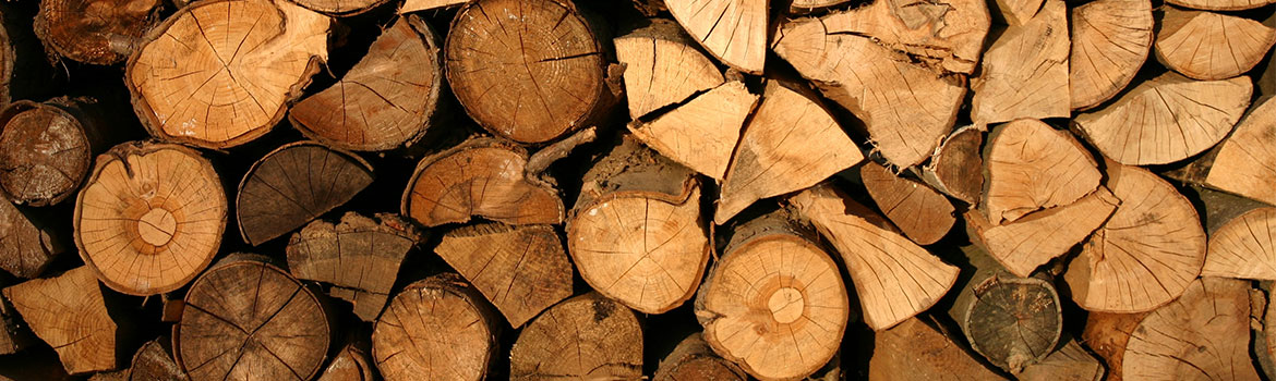 Identifying Good Firewood