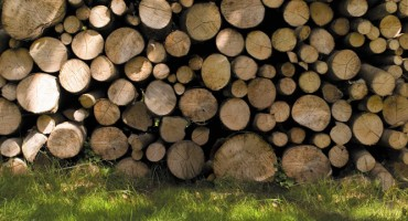 Keep your logs dry and burn-ready