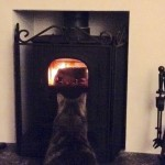 """""""Small but Purrfect"""" states Pixie the cat"""