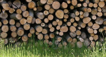 Buy your logs now – you do not have to wait until autumn!