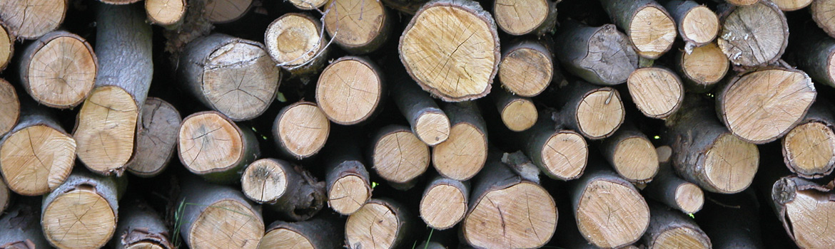 Tips on buying logs for your wood burning stove