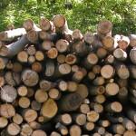 woodpile-fi